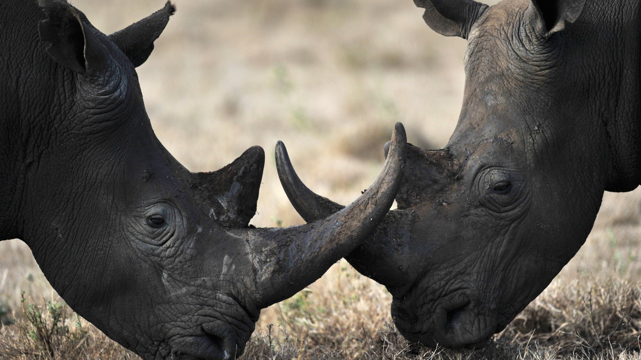 'Rhino bond' breaks new ground in conservation finance